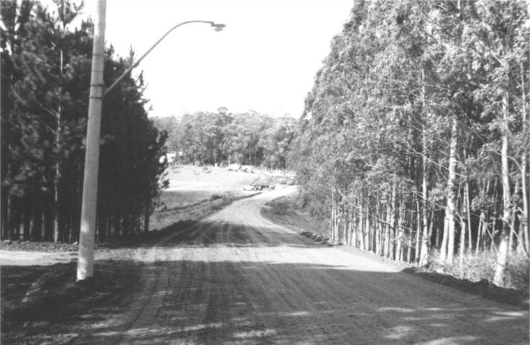 Avenida do Bosque